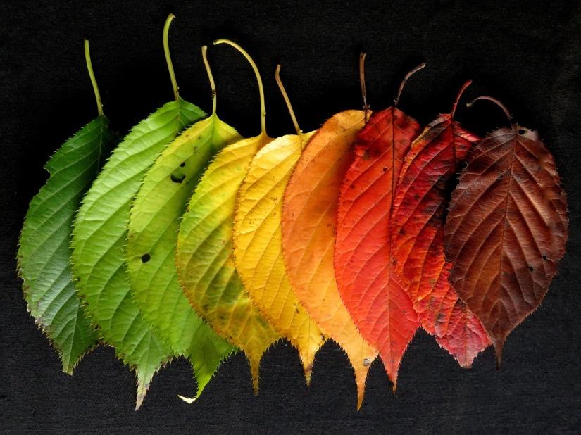 autumn-leaves-1460733_1920